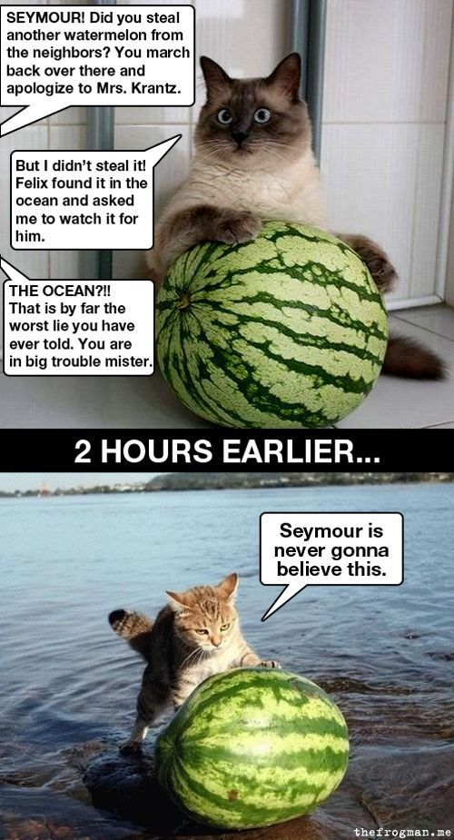cat-cats-kitten-kitty-pic-picture-funny-lolcat-cute-fun-lovely-photo-images-seymor-watermelon