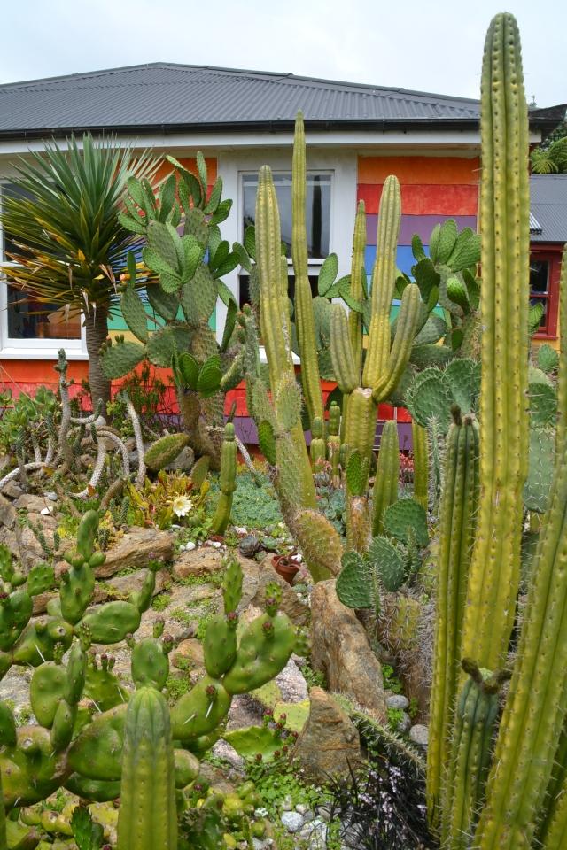 Cactus Garden (1)