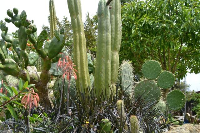 Cactus Garden (5)