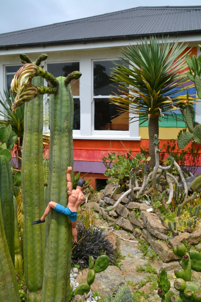 Cactus Garden (6)