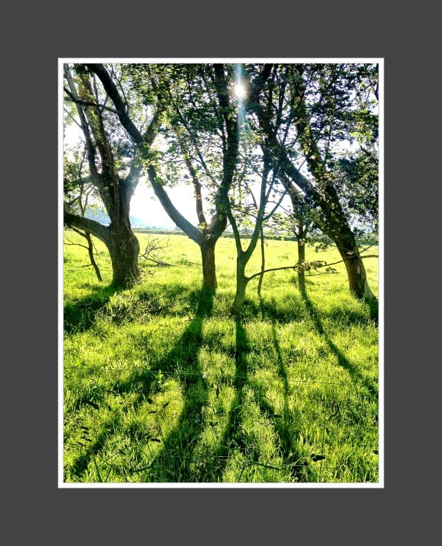 green Karamea (3)