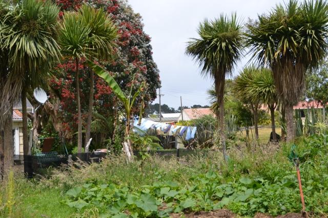 Permacultural garden (3)