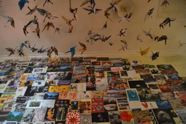 Rongo Birds (19)