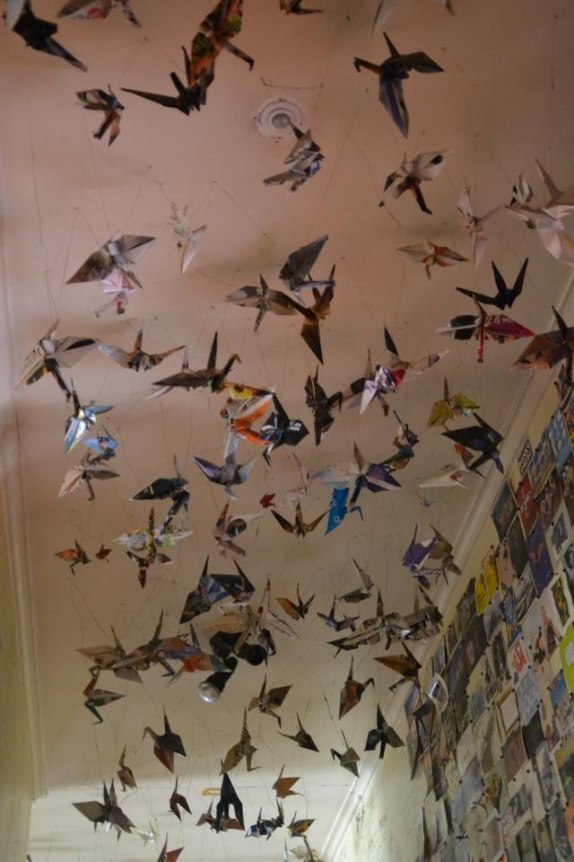 Rongo Birds (20)