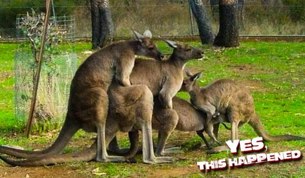 australian-foursome
