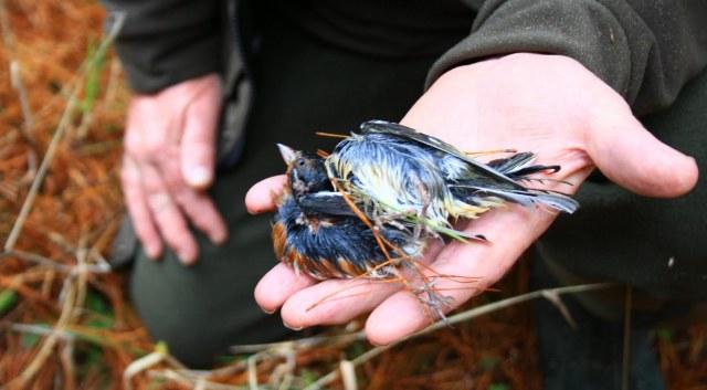 Taupo drop couple more birds