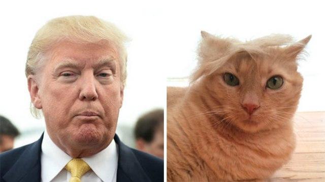 donald-trump-funny-look-alike-201__700