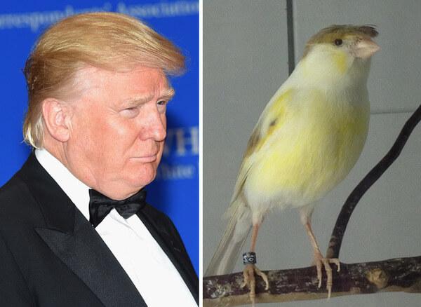 donald-trump-funny-look-alike-3__700
