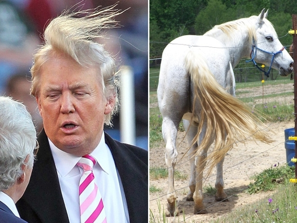 pic-9-things-donald-trump-looks-like-176167