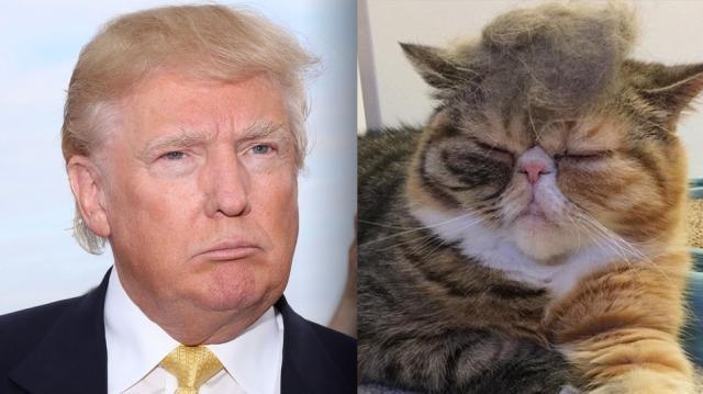 trump-cat