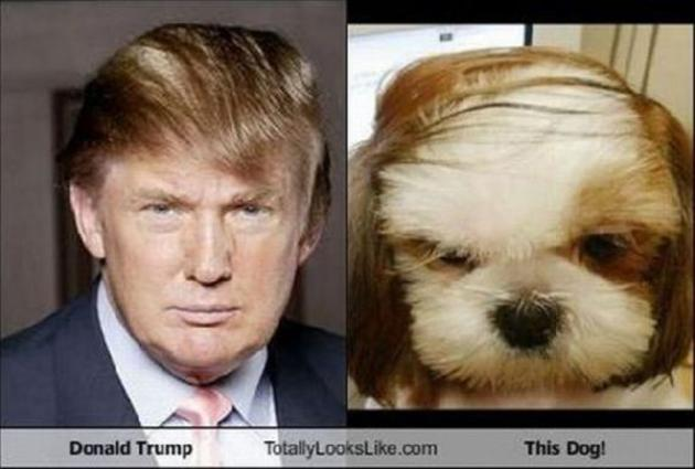 VH-donald-trump-looks-like-comb-over-dog