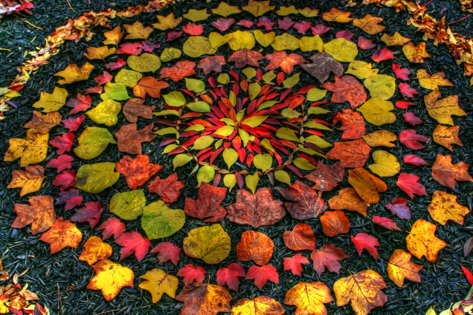 Scottish Artist Andy Goldsworthy Enhances Nature The Rongolian Star